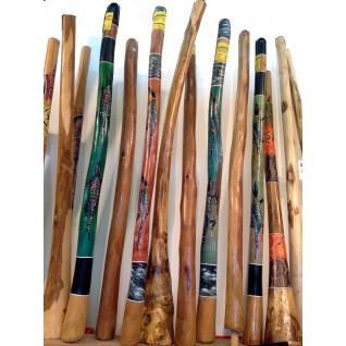 Didgeridoo Eucalyptus Termité